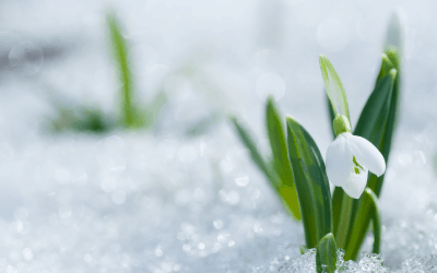 To Plant or To Not Plant: Winter Edition