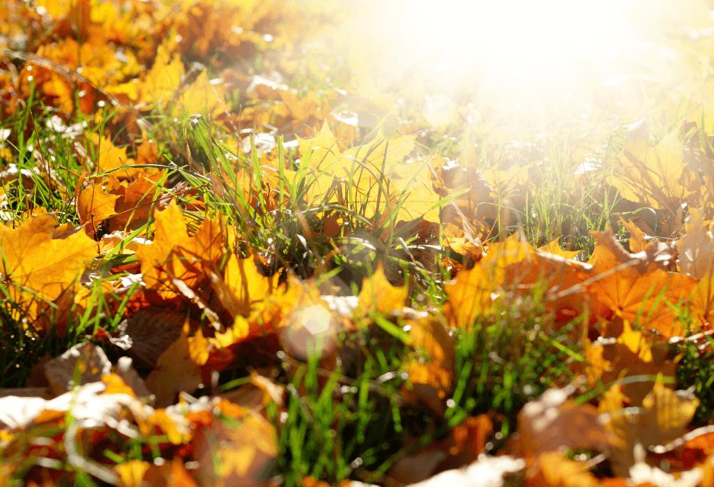 fall lawn treatment