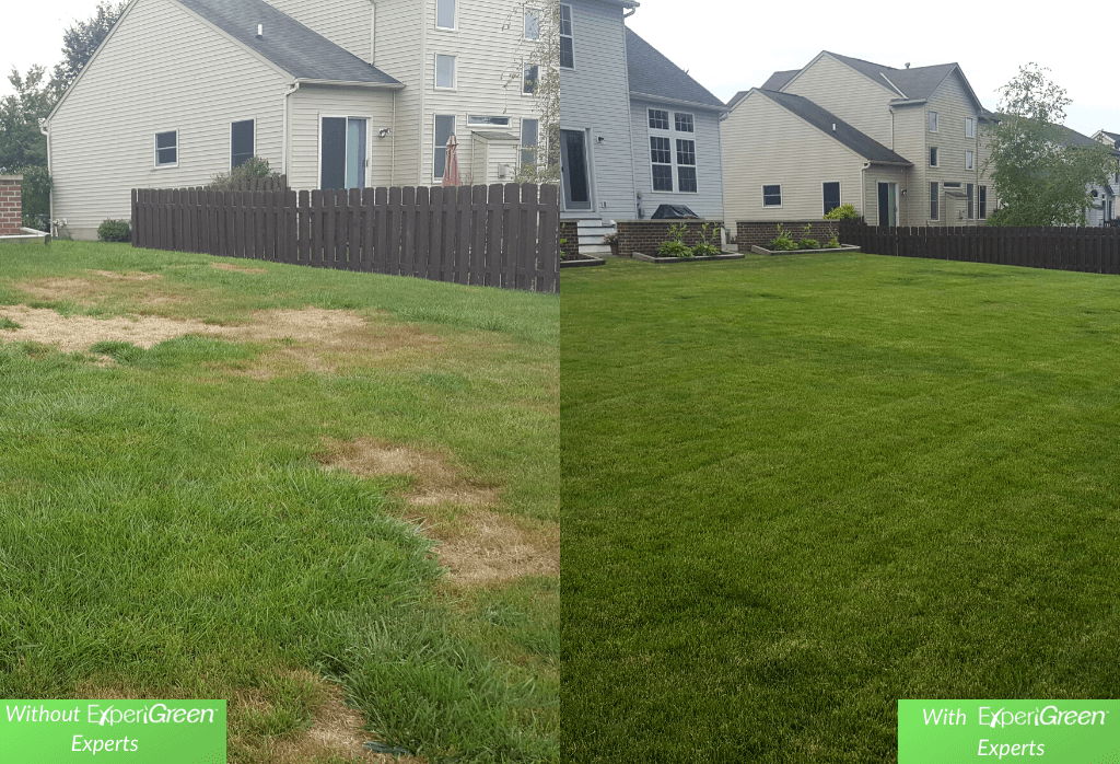 ExperiGreen Lawn Care Before and After