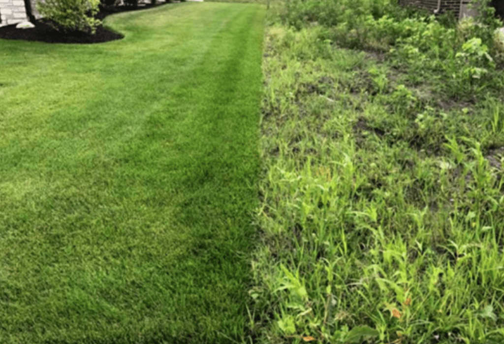 Indianapolis Lawn Before and After