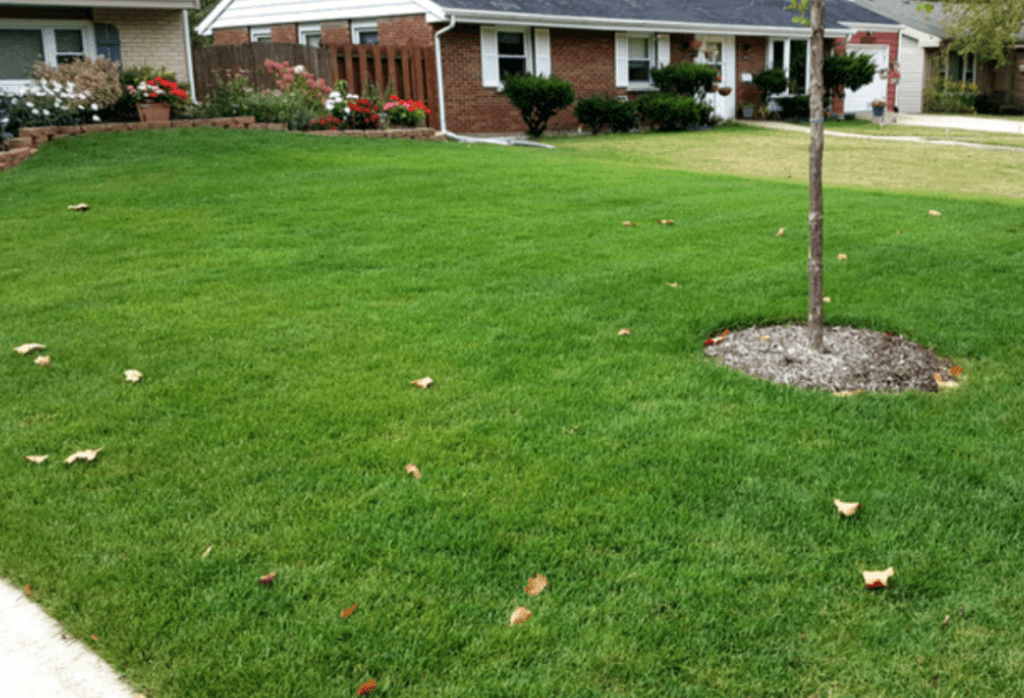 Lawn Care in Chicago IL