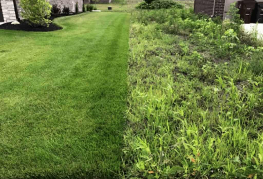 Charlotte Lawn Before and After