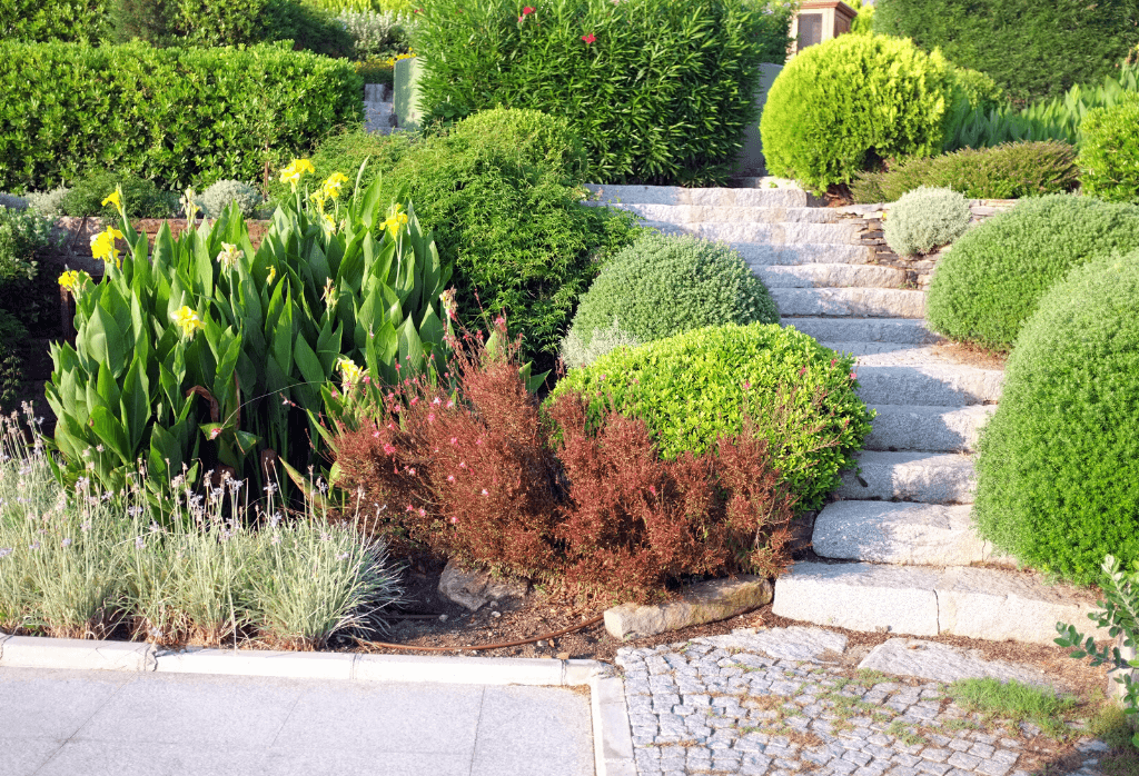 Tree Root and Shrub Care Services Near Me