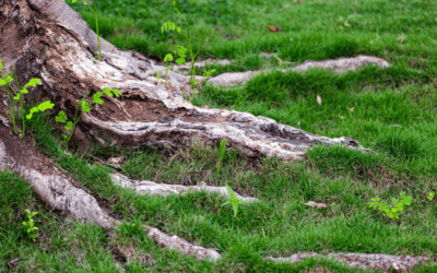 Tree Roots and Shrub Care Service