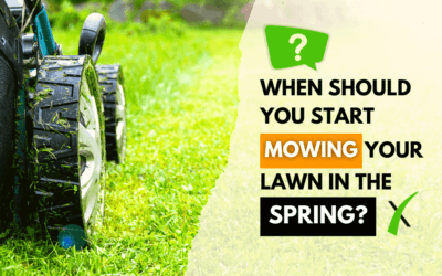 When To Start Mowing in The Spring-Top Tips