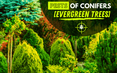 Evergreen Trees Pest Control