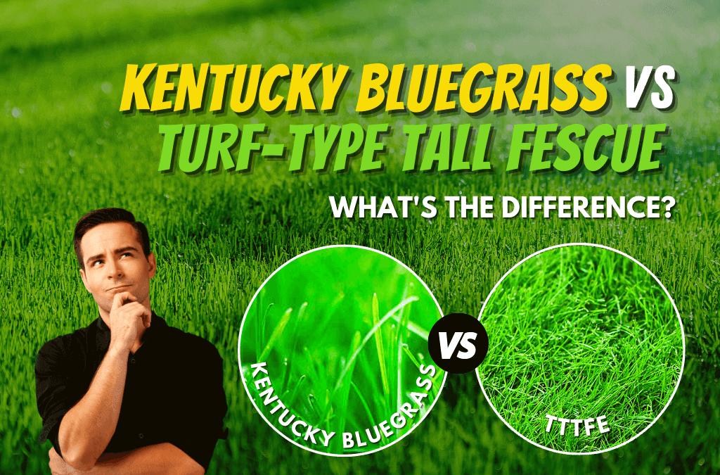 Kentucky Bluegrass or Turf-Type Tall Fescue