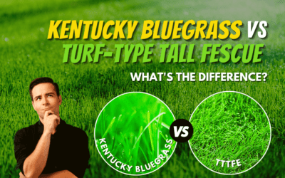 Kentucky Bluegrass or Turf-Type Tall Fescue