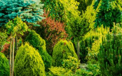 Pest Control Evergreen Trees