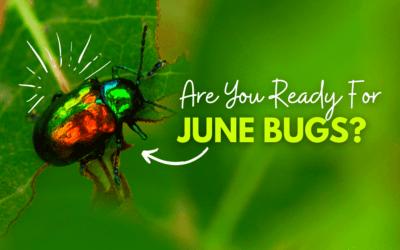 2021 June Bugs