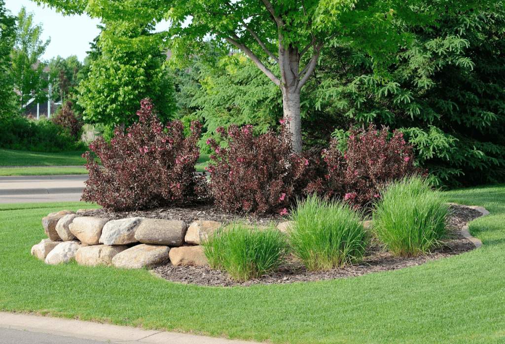 Are Your Tree and Shrubs Suffering From Summer Heat Stress