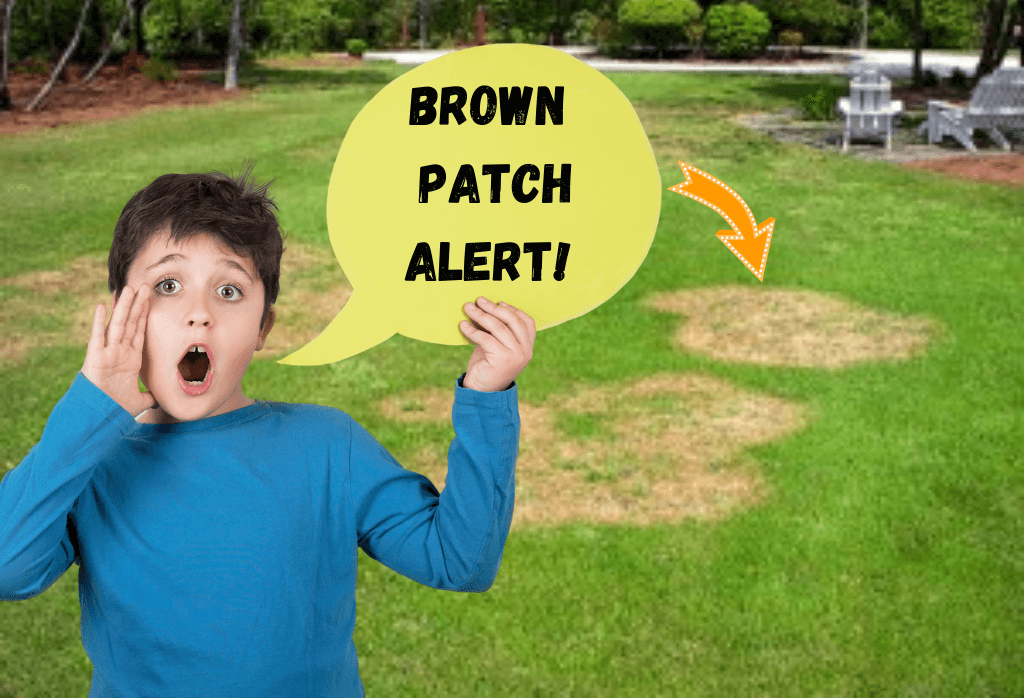 Brown Patches In Your Lawn