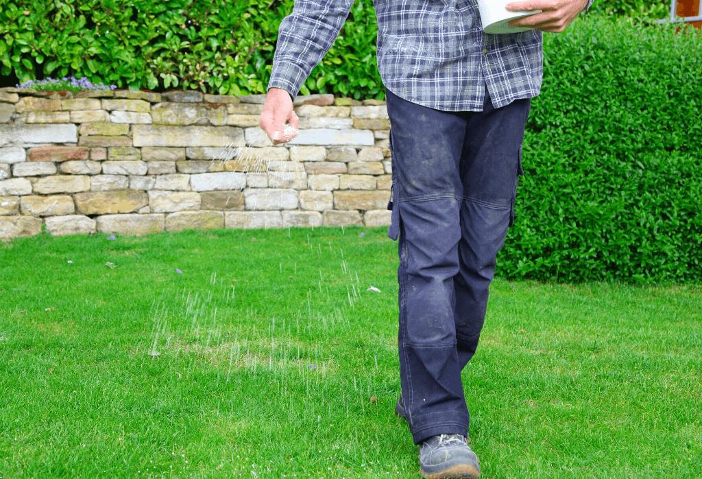 Best Fertilizer For My Lawn This Summer