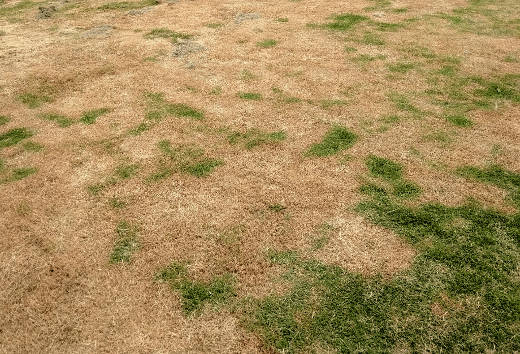 Common Lawn Problems and Issues This Summer