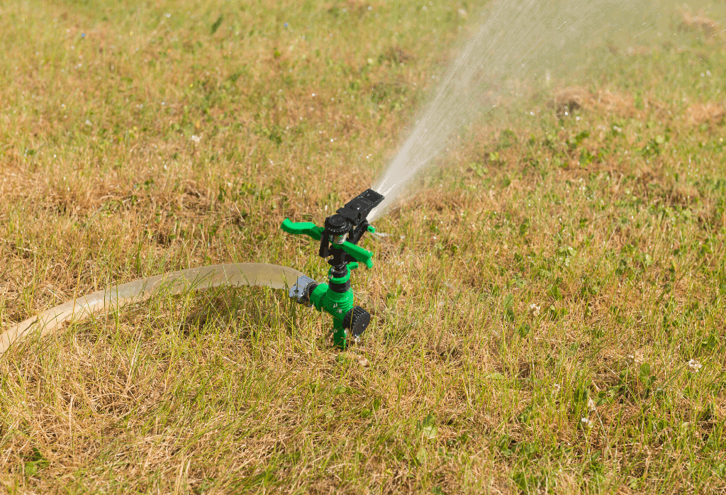 Lawn Problems You Will Face This Summer