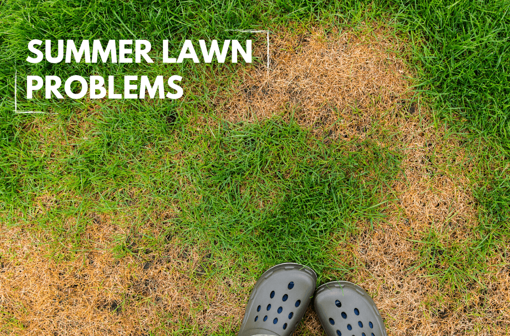 Summer Lawn Problems