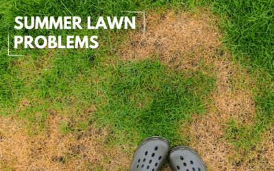 Summer Lawn Problems