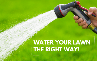 What You Need to Know About Watering Lawns and Sprinklers