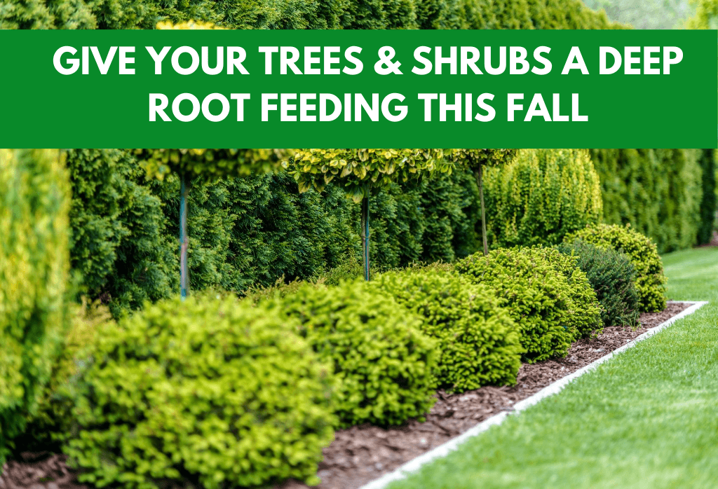 Fall Tree & Shrub Care ExperiGreen