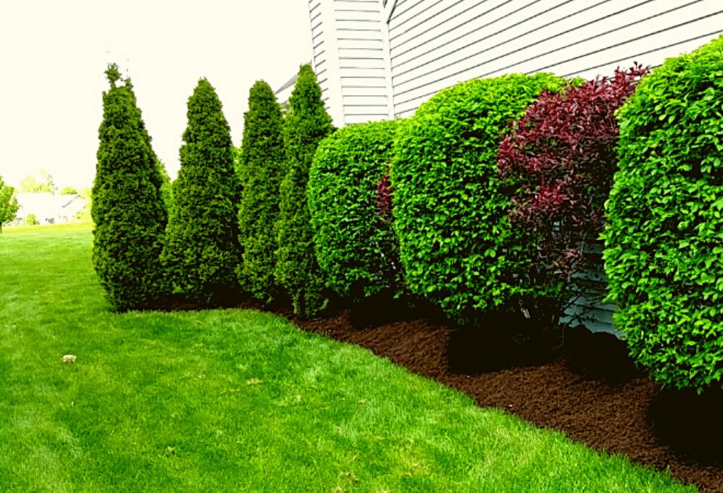 Fall Tree and Shrub Care