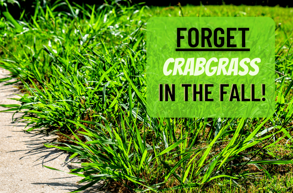 Forget Crabgrass in the Fall