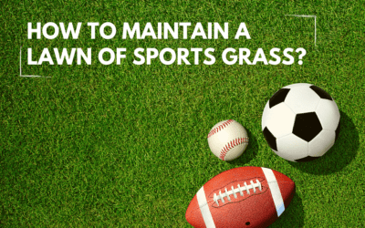 How To Build A 'Sports Grass' Lawn