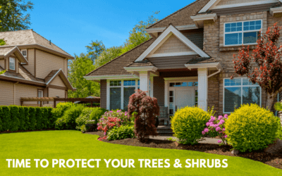 Protect Your Trees In The Fall