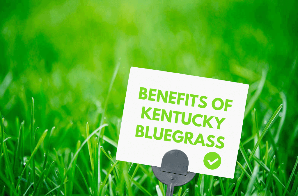 Benefits Of Kentucky Bluegrass