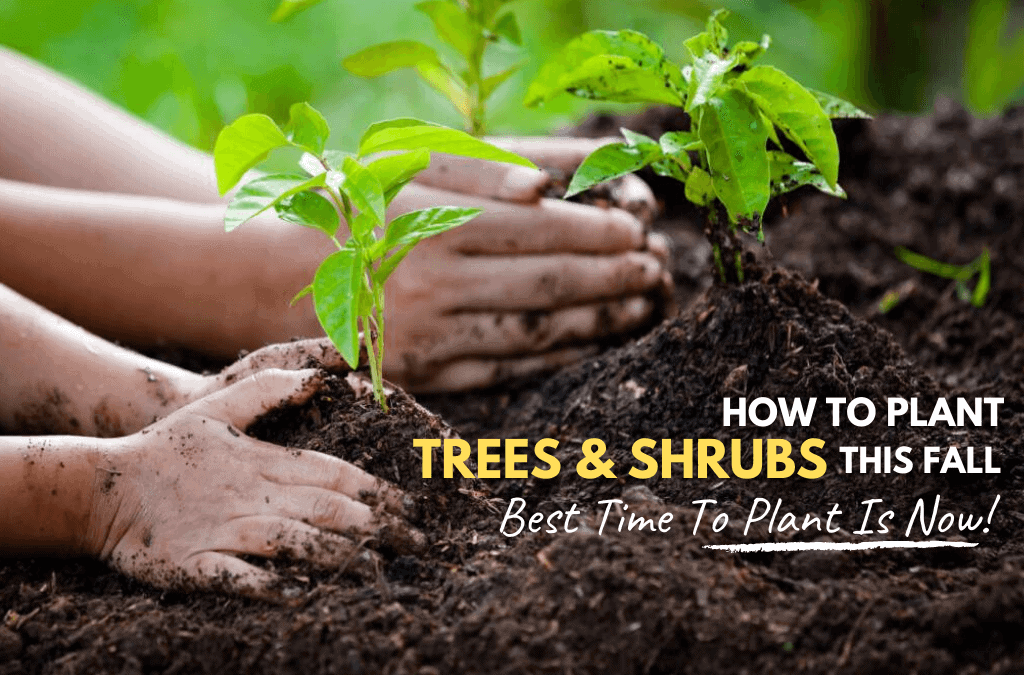 Fall Tree Planting Success