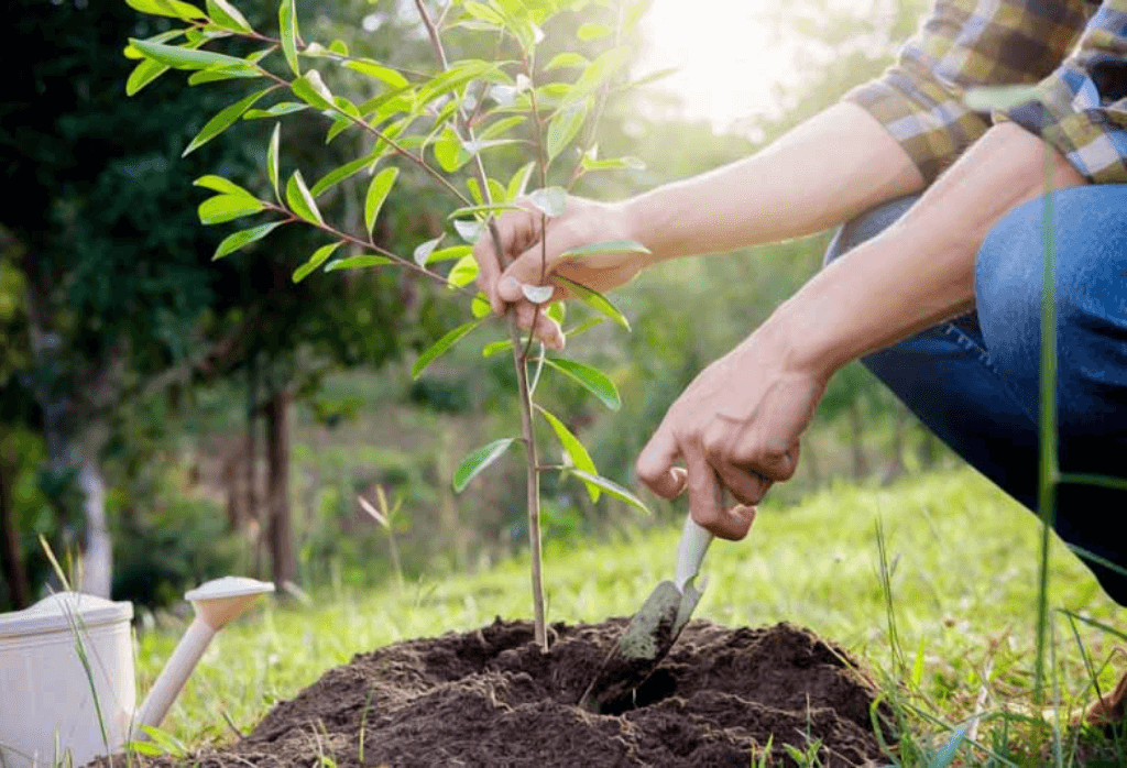 Great Fall Tree And Shrub Planting Tips You Need To Know