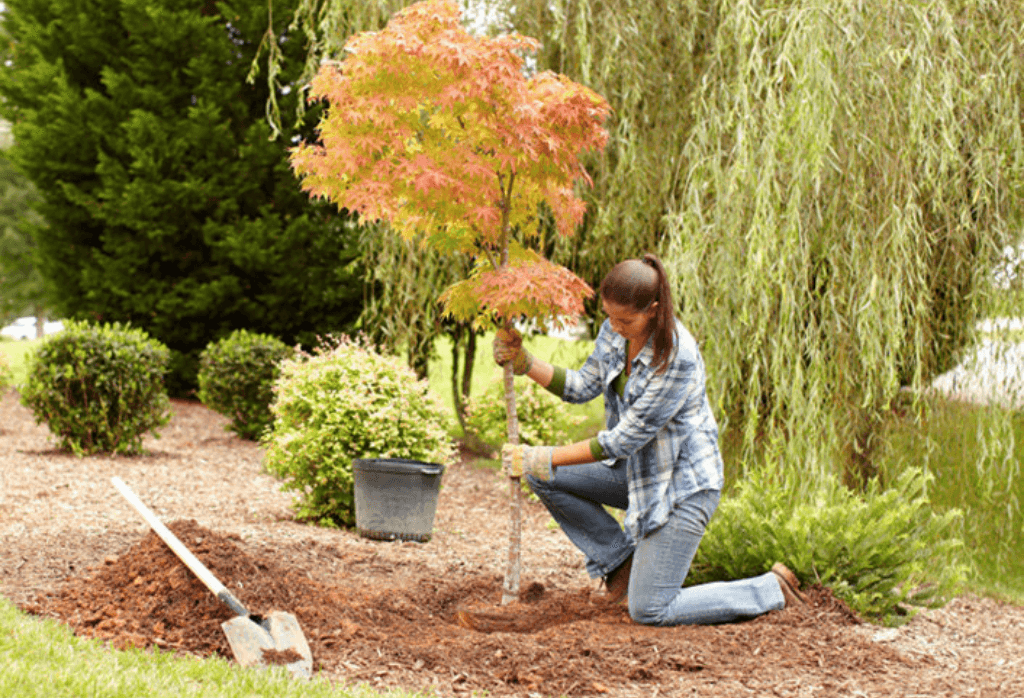 How to Plant Trees & Shrubs in the Fall