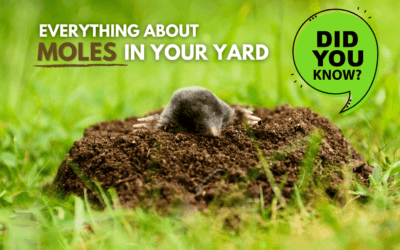 Moles – What You Need to Know