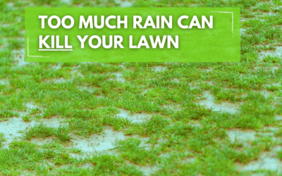 Too Much Water Can Kill Your Lawn