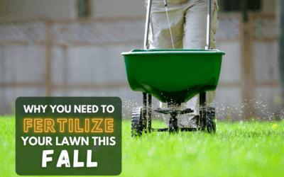 Why Fertilize In The Fall