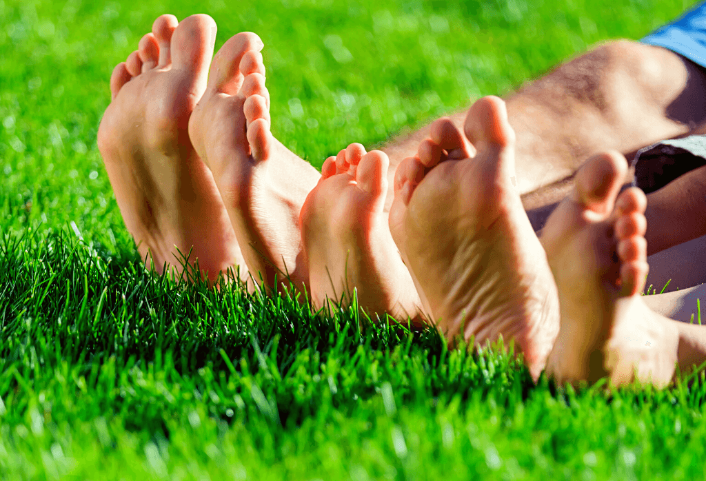 Why Kentucky Bluegrass Makes A Great Lawn