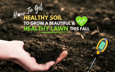 Healthy Soils for Healthy Lawns