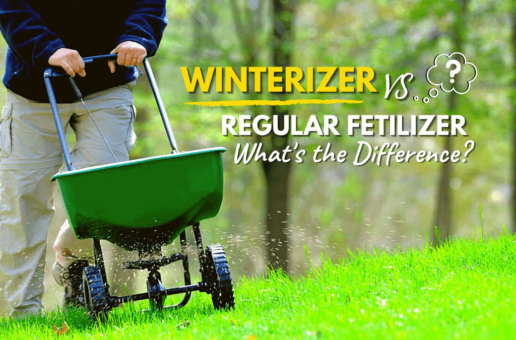 Winterizer vs Regular Fertilizer