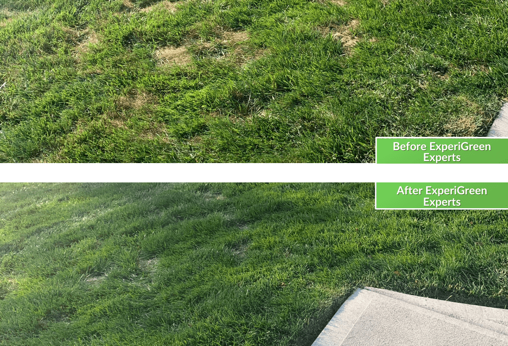 ExperiGreen Lawn Care Before & After Cincinnati Ohio