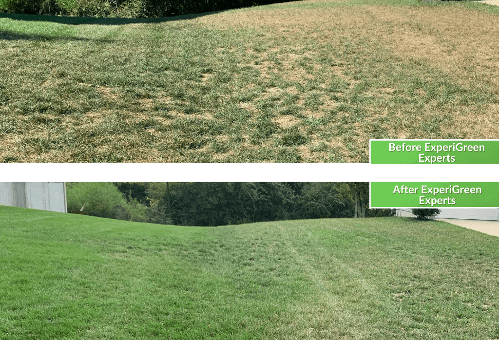 Lawn Care Before & After Cincinnati Ohio