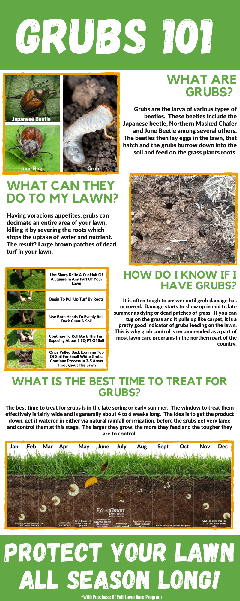 Lawn Grub Control Infographic