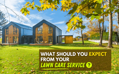 What You Should Expect from Your Lawn Service