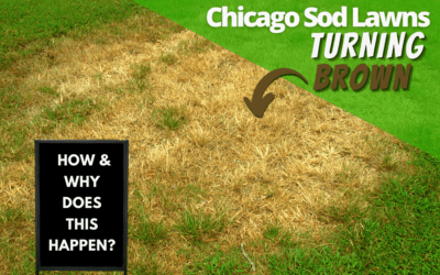 Why Chicago Sod Lawns Are Turning Brown In Spring