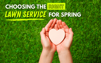 Choosing the Right Lawn Service
