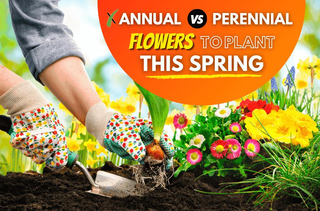 Annual vs Perennial Flowers To Plant This Spring Season