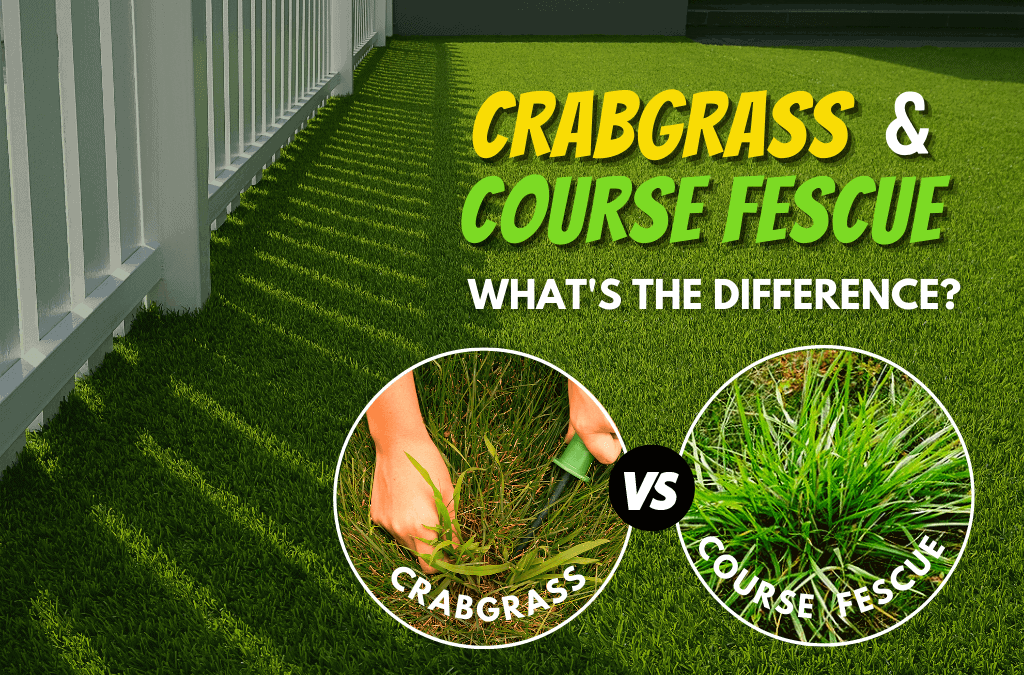 The Difference Between Crabgrass And Coarse Fescue