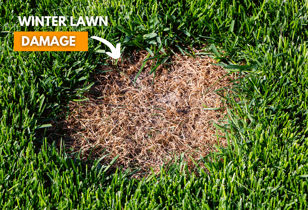 Seeding Winter Damage Lawns This Spring