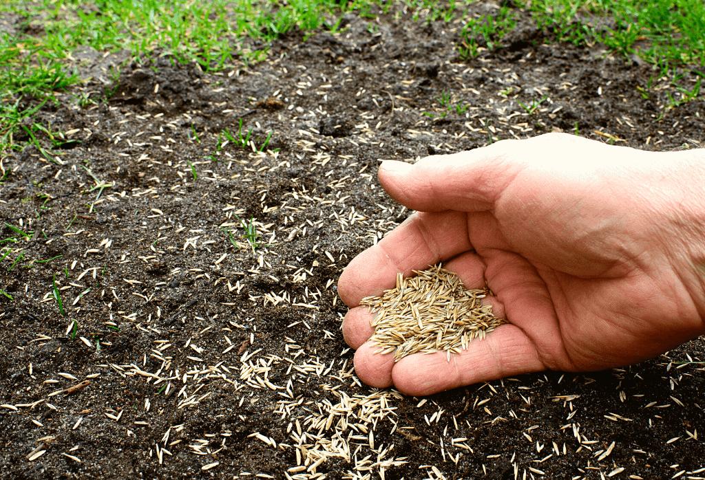 Spring Seeding