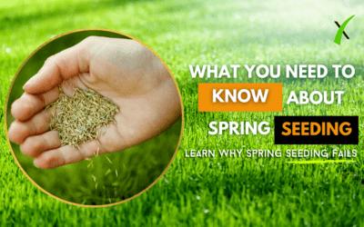 Why Spring Seeding Fails