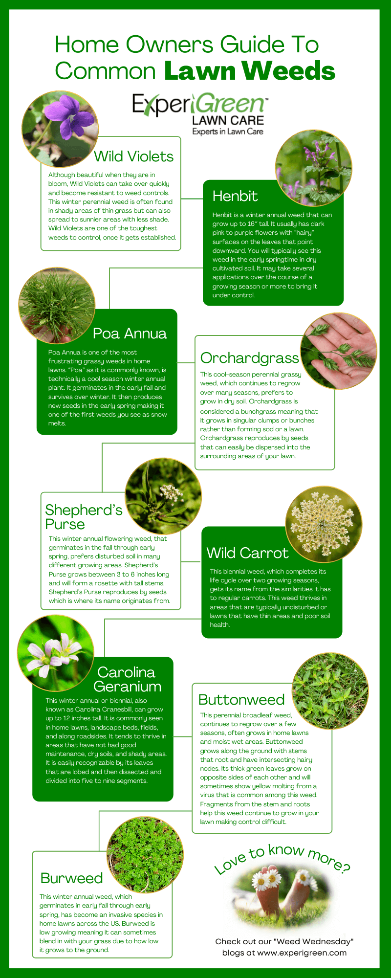 Home Owners Guide To Common Lawn Weeds By ExperiGreen's Weed Wednesday