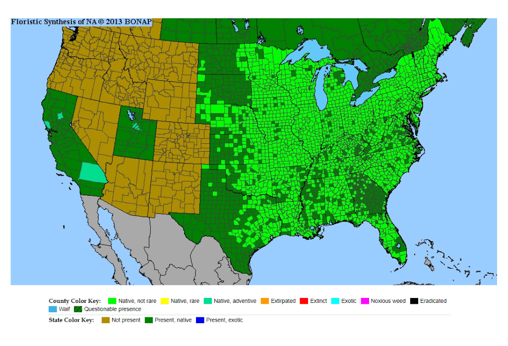 Wild Violets Weed Map US